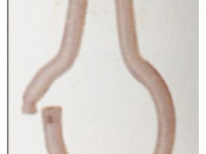 Ganchos cortina baño P 30
